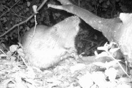 Když jde malý bobr spát… aneb bobří story na Plzeňsku