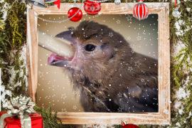 Vánoční nadílka pro zvířata v nouzi